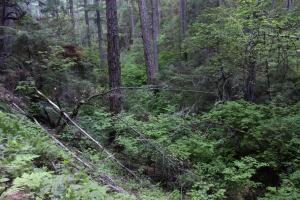 Cascades, Squaw Valley Creek - June2013 019_edited-1 (Custom)