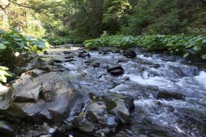 Cascades, Squaw Valley Creek - June2013 081 copy (Custom)