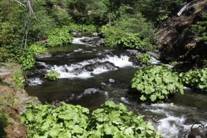 Cascades, Squaw Valley Creek - June2013 101 copy (Custom)