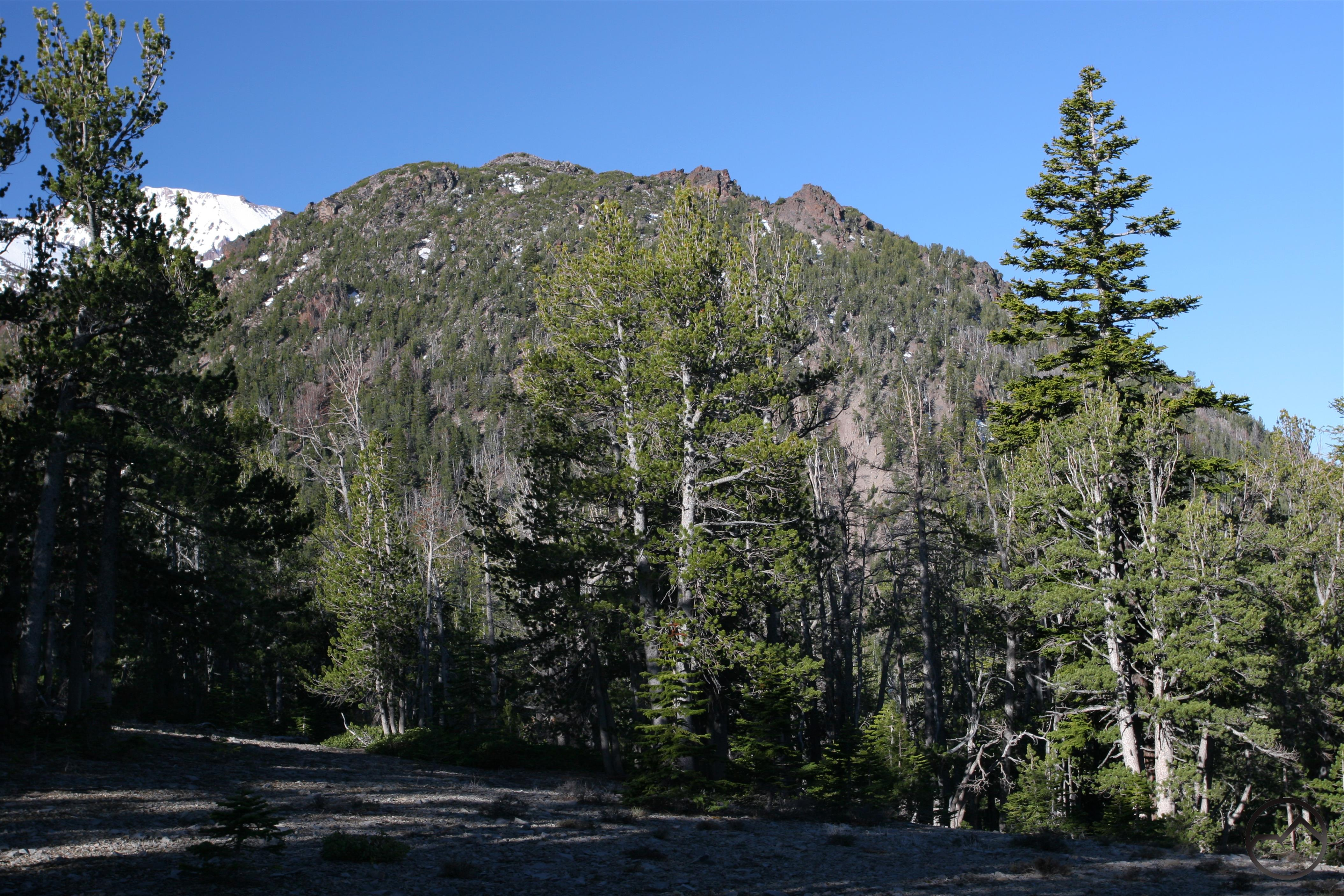 mt shasta hiking trails