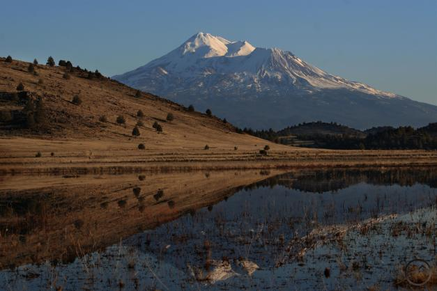 Shasta Valley - Jan2011 014  (Custom)