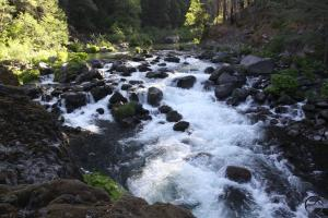 Cascades, McCloud River - May2014 020 (Custom)