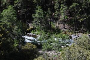 Cascades, McCloud River - May2014 057  (Custom)