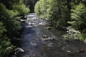 Cascades, McCloud River - May2014 065  (Custom)