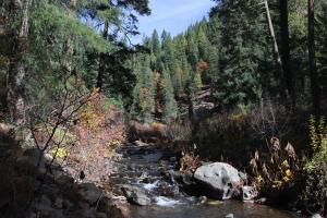 Cascades, McCloud River - Nov2014 019 copy (Custom)