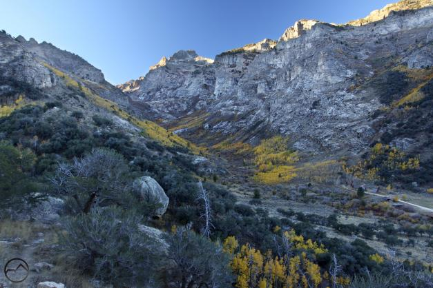 Aspens line the East Fork of Lamoille Creek.