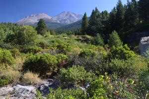 Mount Shasta from Cascade Gulch