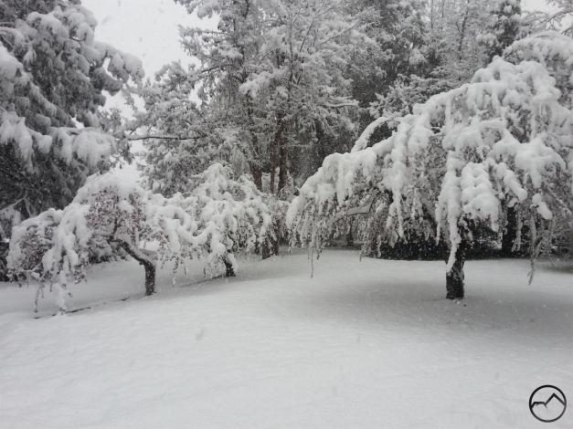 Snow in Mount Shasta!