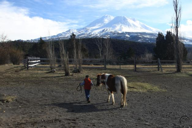 My son walks his pony after his riding lesson during a break in the storms.
