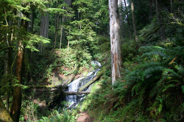 Fern Falls (Custom)