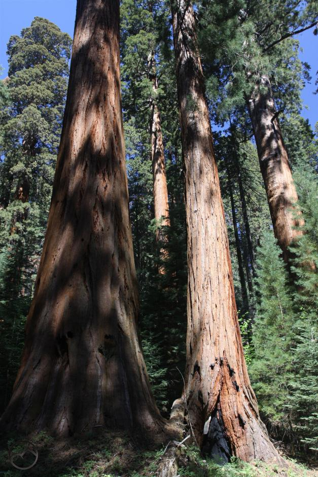 Sierra Nevada, Sequoia - June2016 097_edited-1 (Custom)